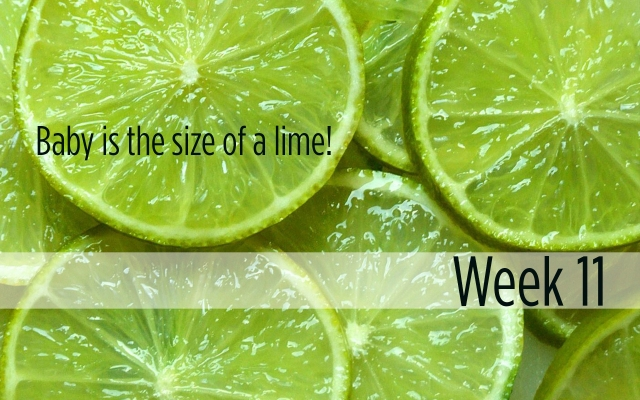 Week 11: Baby is the size of a lime!